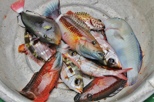 Việt Nam Xanh - Theo chân người câu cá đêm trên vùng biển Trường Sa (Hình 4).
