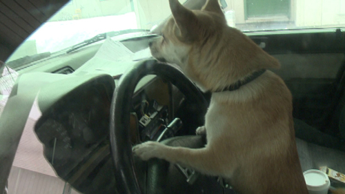Kết quả hình ảnh cho chó lai xe gay tai nan