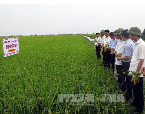 Tái cơ cấu ngành trồng trọt từ lúa gạo