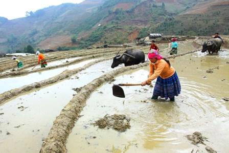 Kết quả hình ảnh cho sản xuất nông nghiệp người Mông'