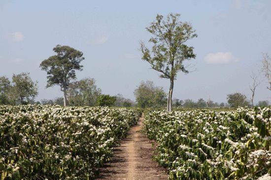 Tháng 3 - Cùng trải nghiệm du lịch Đắk Lắk - ảnh 8