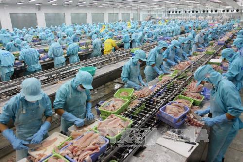Chế biến cá tra xuất khẩu của Công ty Bianfishco, TP Cần Thơ. Ảnh: Huy Hùng/TTXVN