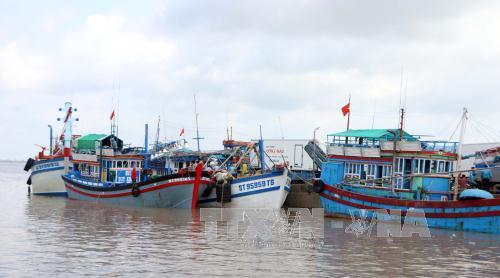 Nhộn nhịp tàu cá vào cảng Trần Đề