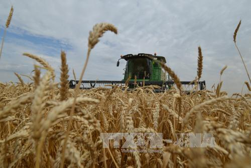 Nga tiếp tục lập kỷ lục xuất khẩu ngũ cốc
