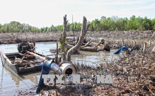 Rừng bãi bồi giờ đây bị phá tan hoang.
