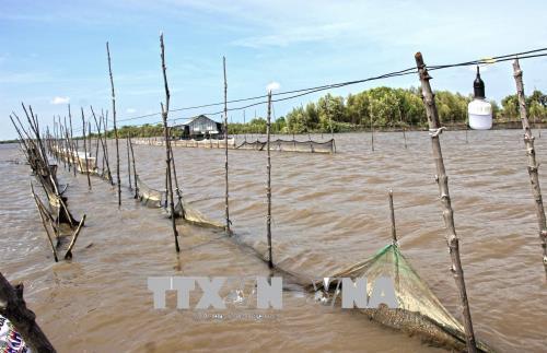 Khuôn viên nuôi sò của các đối tượng tại xã Rạch Chèo.