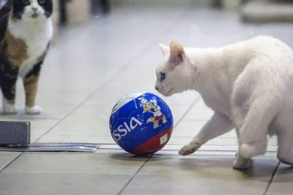 """Mèo điếc, vượn cáo """"bất đồng"""" về kết quả trận Nga – Saudi Arabia"""